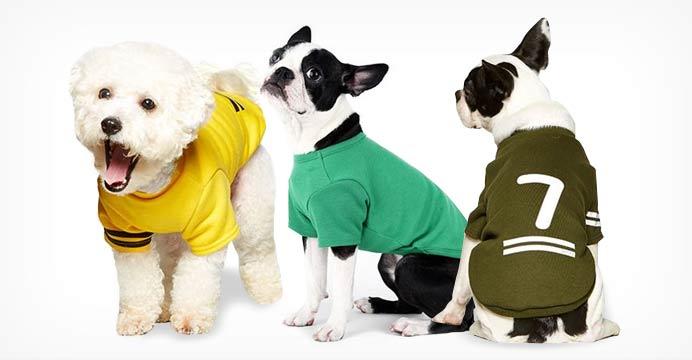 디즈니&펫스타 강아지 가을옷 모음