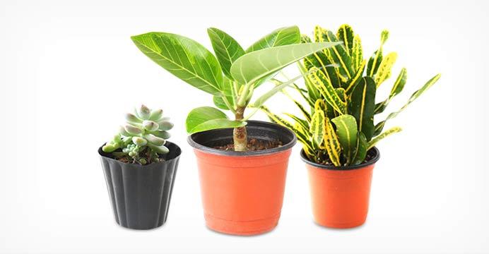 공기정화식물/다육이 골라담기
