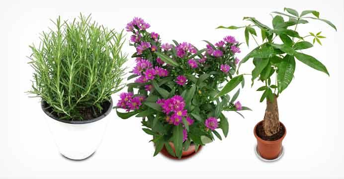 중대형 공기정화식물 화분