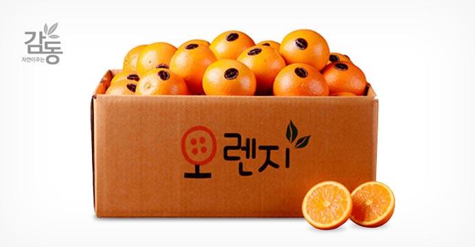 2개구매5과증정/고당도 오렌지 23과