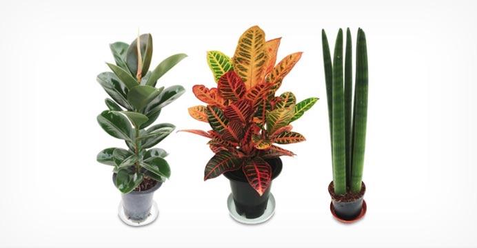 중대형 공기정화식물 50여종